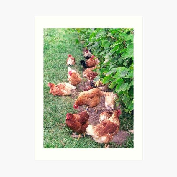 Vineyard With Chickens Art Print