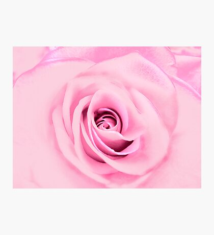 Lovely Pink Rose  Photographic Print