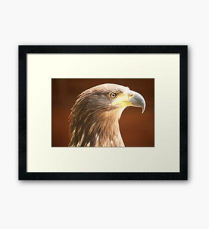 Birds of Prey Series No 1 Framed Print