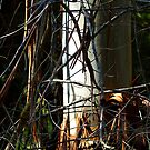 New Tree replacing dead forest. by ronsphotos