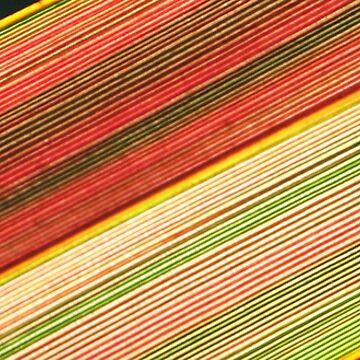 Phormium crop by mooksool