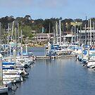 Fisherman's Wharf  Through The Masts by Sandra Gray