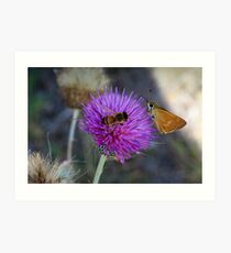 Insects on thistle Art Print