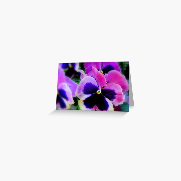 Perfect Pansies Greeting Card