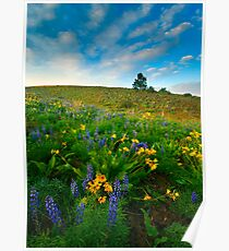 Meadow Gold Poster