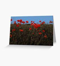 Poppy Fields Greeting Card