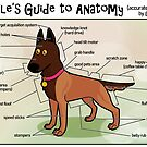 Noodle's Guide to Anatomy (English) by malinoodle
