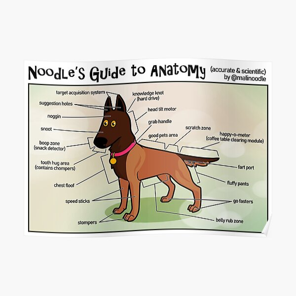 Noodle's Guide to Anatomy (English) Poster