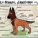 Noodle's Guide to Anatomy (French) by malinoodle