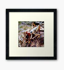 Weta works Framed Print