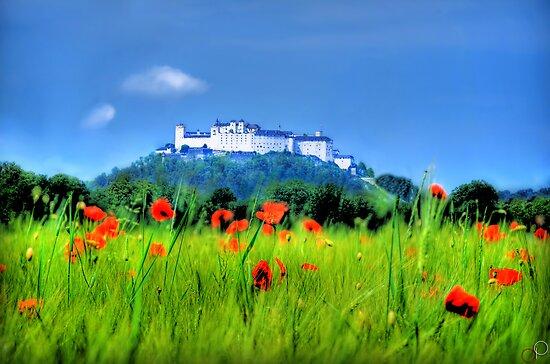 Salzburg Poppies by Luke Griffin