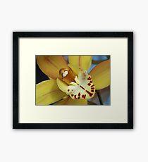 Yellow Cymbidium Orchid Closeup Framed Print