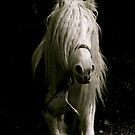 Equine by Lou Wilson