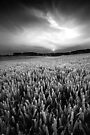 Against the Grain BW by Andy Freer