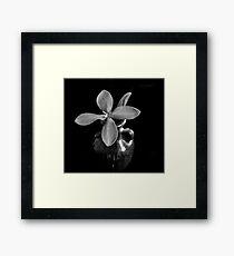 Monotone Macro Floral Arragement Framed Print