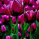 Pink Tulips by Andre Faubert