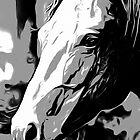 Horse Portrait by Andre Faubert