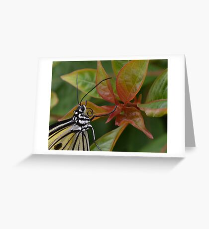 """""""Smiling"""" Paper Kite Butterfly Greeting Card"""