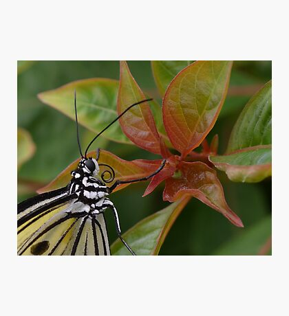 """""""Smiling"""" Paper Kite Butterfly Photographic Print"""