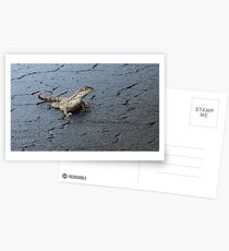 First Incursion - Curly Tailed Lizard Postcards