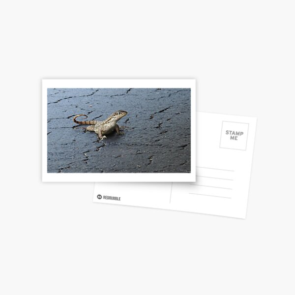 First Incursion - Curly Tailed Lizard Postcard