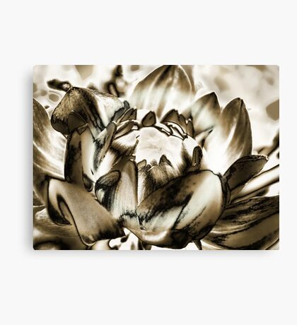 Birth of a Flower  Canvas Print