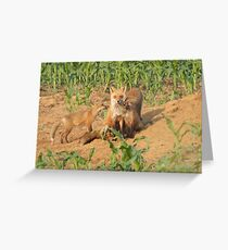 Redfox in Chester county Greeting Card