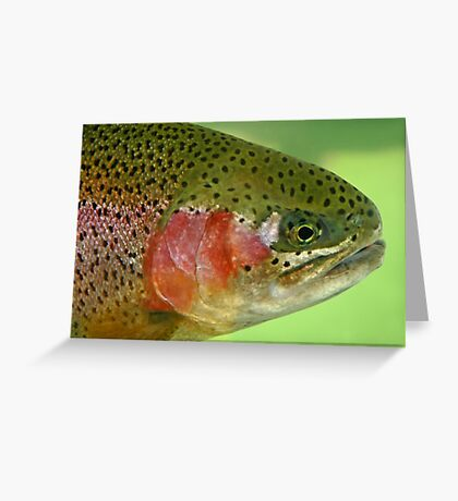 Oregon Rainbow Trout Greeting Card