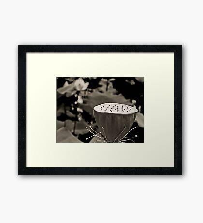 Black and White Lotus Seed Pod Framed Print