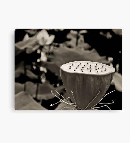Black and White Lotus Seed Pod Canvas Print