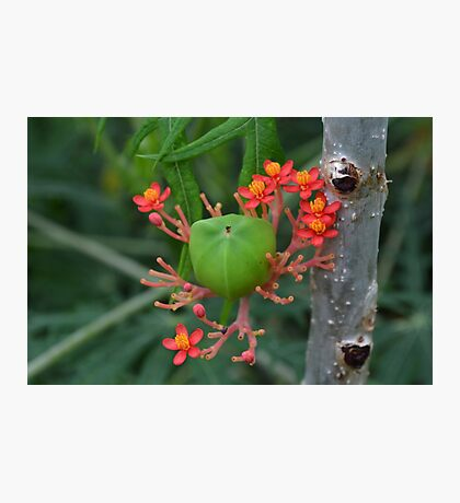 Little Flowers with Green Pod Photographic Print