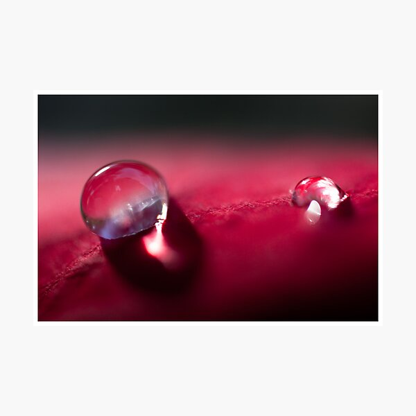 Red Drops Photographic Print