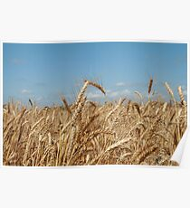 Grain Poster