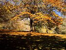 """""""Autumn Canopy"""" by Heather Thorning"""