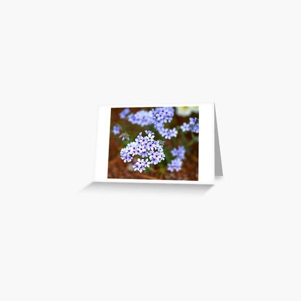 Star Flowers Greeting Card
