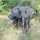 Elephants in Hwange by Bertspix1
