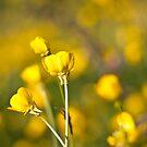 Let the sun shine by Karen Havenaar