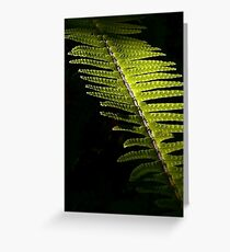Light in the Forest:  Fern Greeting Card