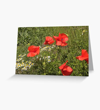 Poppies Just Blowin in the Wind Greeting Card