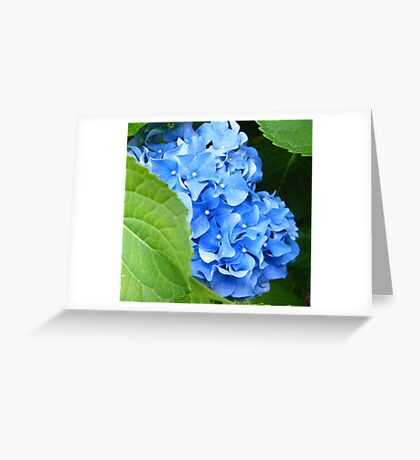 Peeping Out Greeting Card
