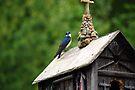 A Bird Church by John Schneider