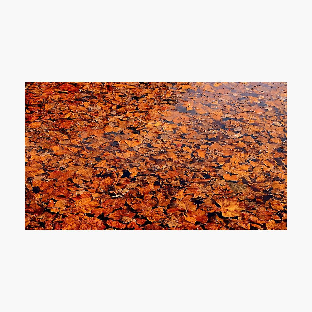 Drowned autumn Photographic Print