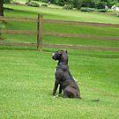 Sophie at alert by Marlene Piccolin