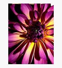 Purple Magic Photographic Print