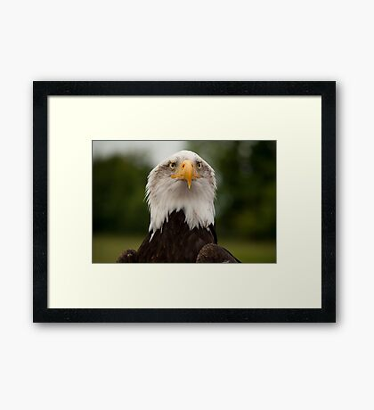 Birds of Prey Series No 11 Framed Print