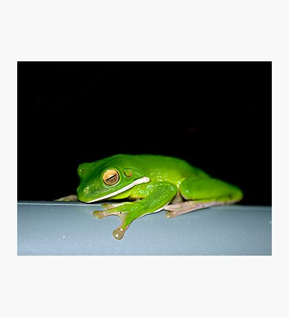 Hanging Out - green tree frog Photographic Print