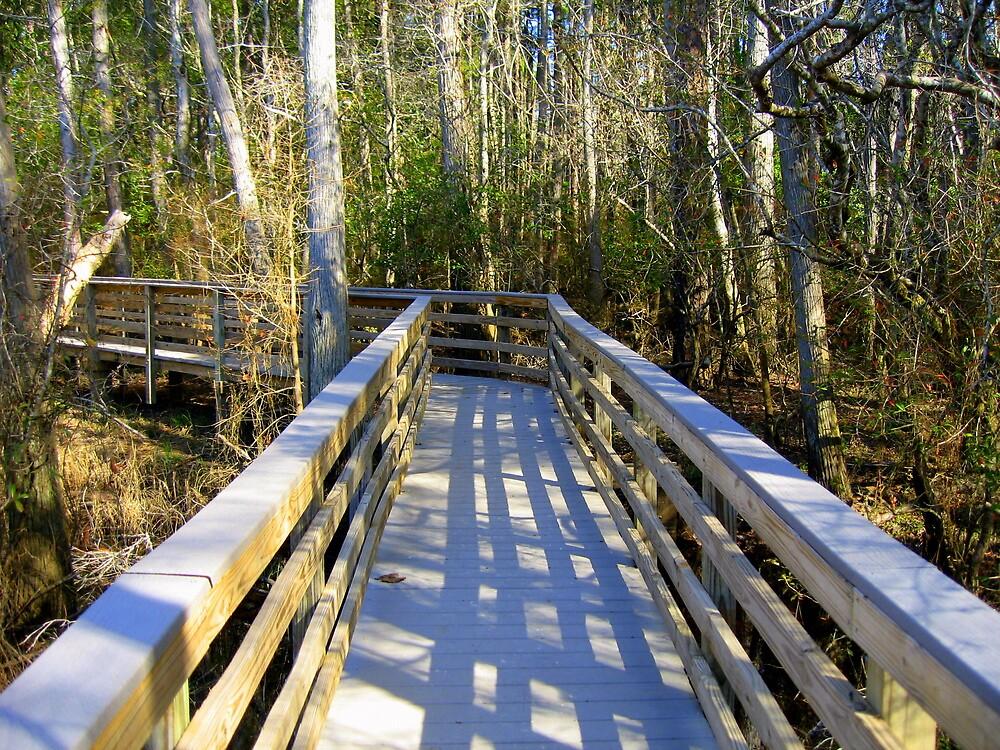 Boardwalk at Blackwater by Debbie Robbins