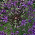 Flower Fireworks by Robert Goulet