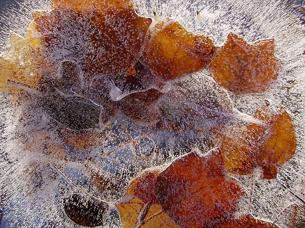Stuck in ice by Courtneystarr