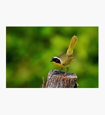 Male Common Yellow Throated Warbler Photographic Print